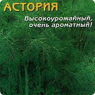 На вагу насіння кропу Асторія (від виробника )