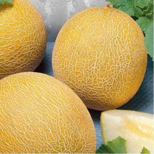 Семена дыни Титовка в Украине