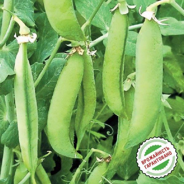 Семена сахарного (овощевой) гороха Скинадо (сингента)