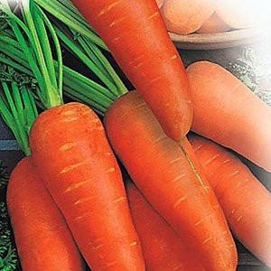 Семена моркови Шантане Реккор, высоко урожайный.