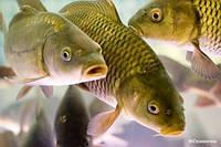 Комбикорм для рыб