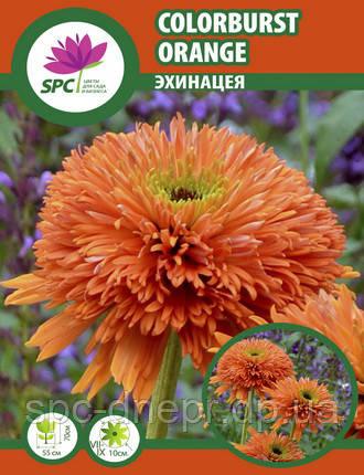 Эхинацея Colorburst Orange, фото 2