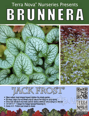 Бруннера Jack Frost, фото 2