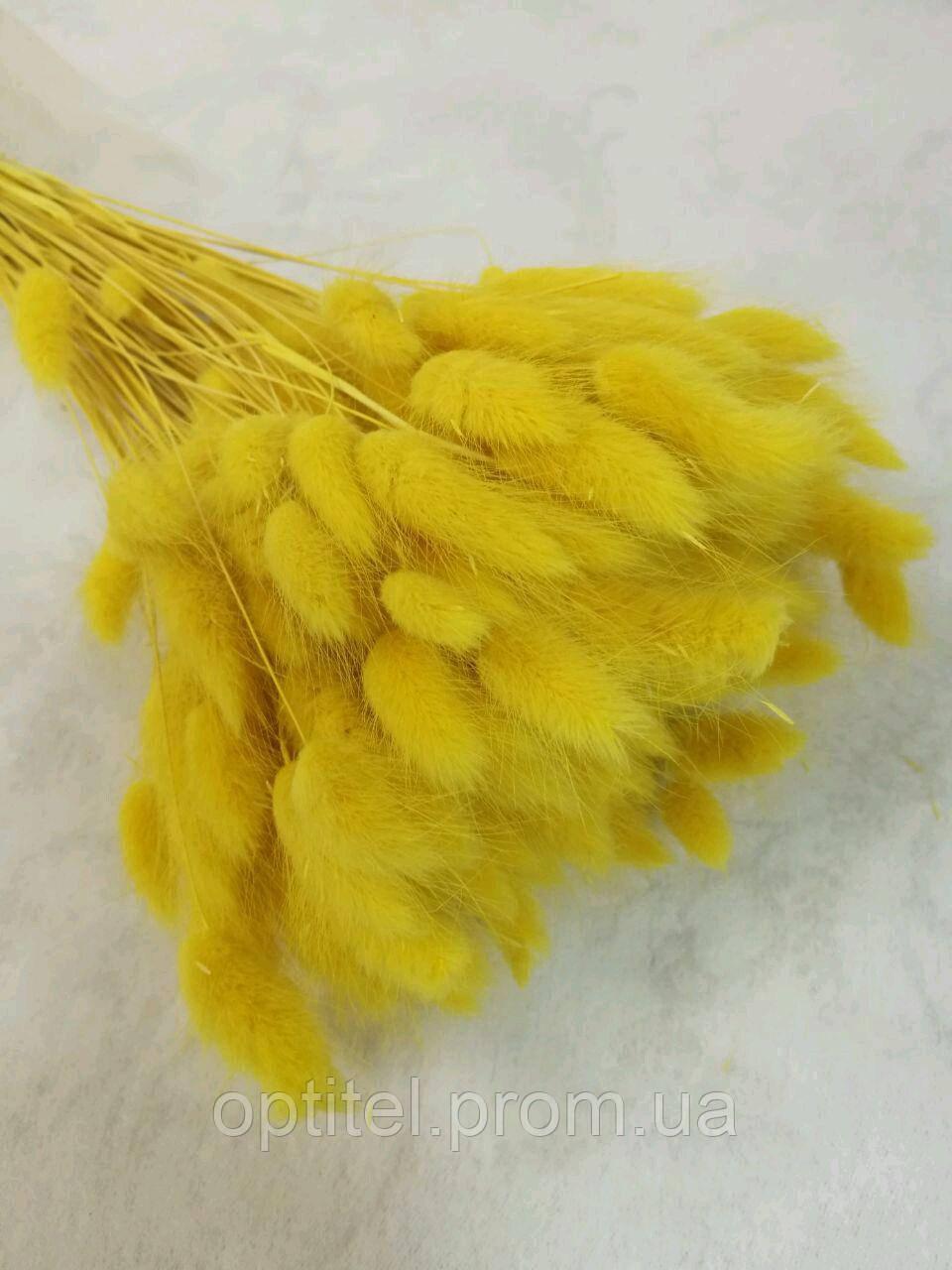 Лагурус (зайцехвост) желтый