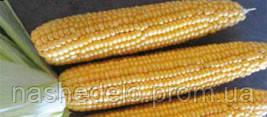 Семена кукурузы сахарной Шайнрок F1 100000 семян Syngenta