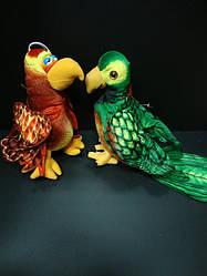 Попугай (2 вида)