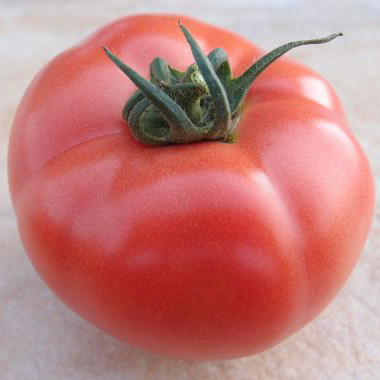 Насіння томату Пінк Джаз F1 500 насінин Hazera