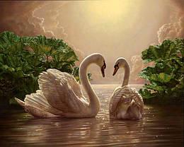Картина за номерами MS325 Любов (лебеді), 40x50 см., Babylon