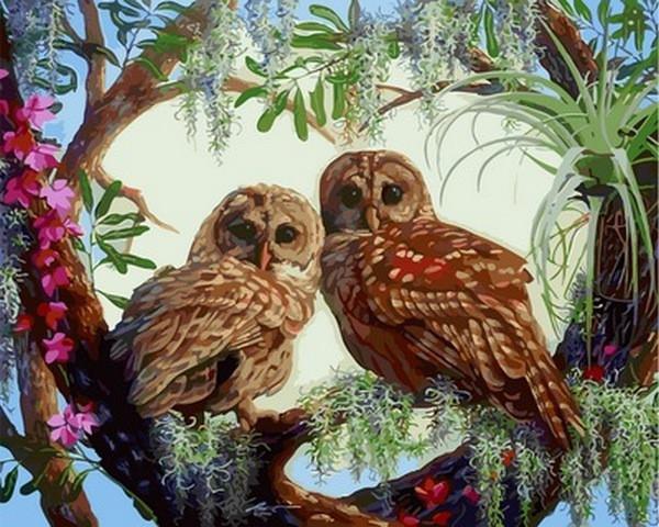 Картина по номерам Внимательные совята, 40x50 см., Babylon