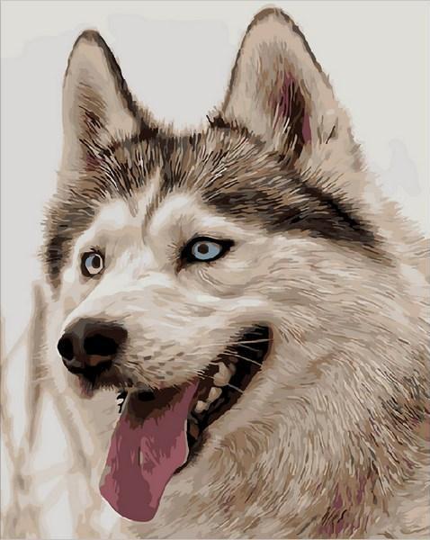 Картина по номерам Жизнерадостный хаски, 40x50 см., Mariposa
