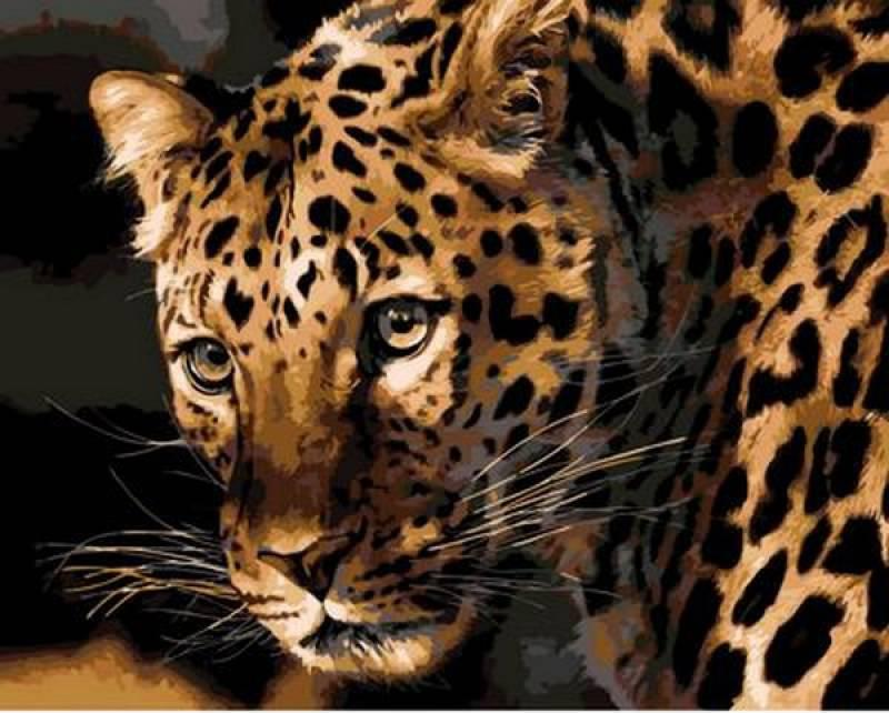 Картина по номерам Настороженный леопард. Худ. Карл Брендерс, 40x50 см., Mariposa