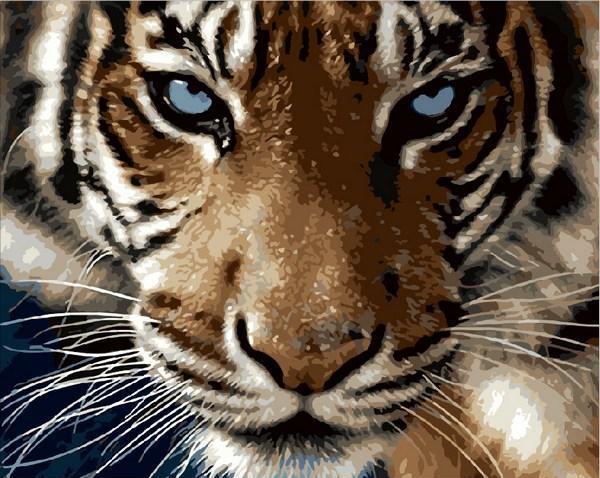 Картина по номерам Взгляд тигра, 40x50 см., Mariposa