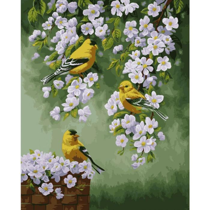 Картина по номерам Зяблики на яблоне, 40x50 см., Идейка