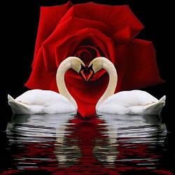 Алмазная вышивка Пара влюбленных лебедей