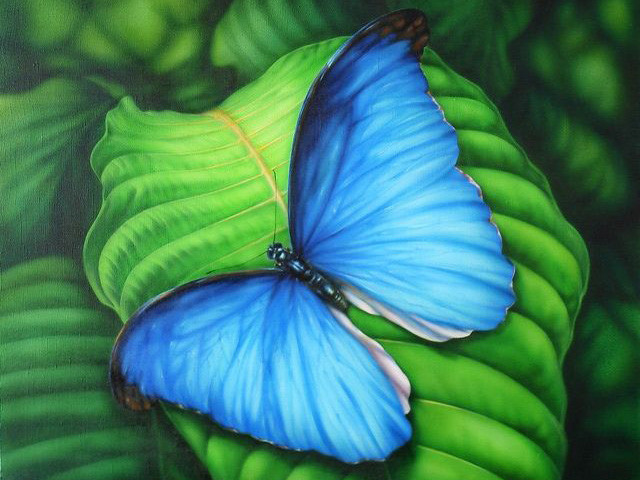 Алмазная вышивка Синяя бабочка 181