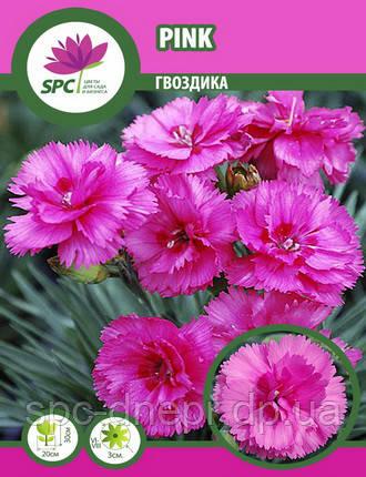 Гвоздика Pink