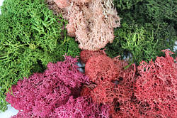 Декоративный мох и кора