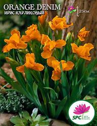 Ирис карликовый Orange Denim