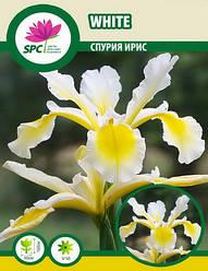 Спурия ирис White