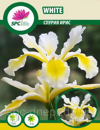 Спурия ирис White, фото 2
