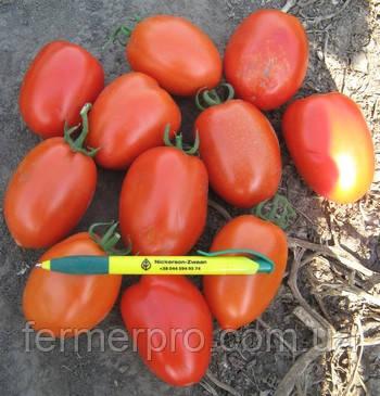 Семена томата Галилея F1 1000 семян Hazera Genetics