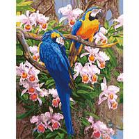 """Картина по номерам """"Яркие попугаи"""" 50х65 см."""