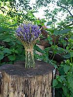 Красивый лавандовый букет с колосками сухоцветов