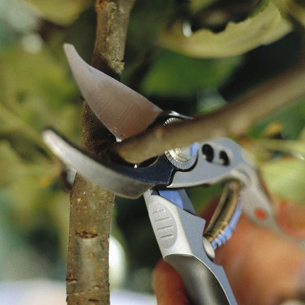 Обрезка деревьев,кронирование,спил веток,санитарная обработка ... | 600x600