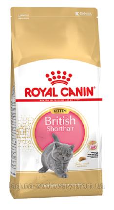 Корм для британских короткошерстных котят до 12 месяцев, 10кг/ Роял Канин KITTEN BRITISH SHORTHAIR, фото 2