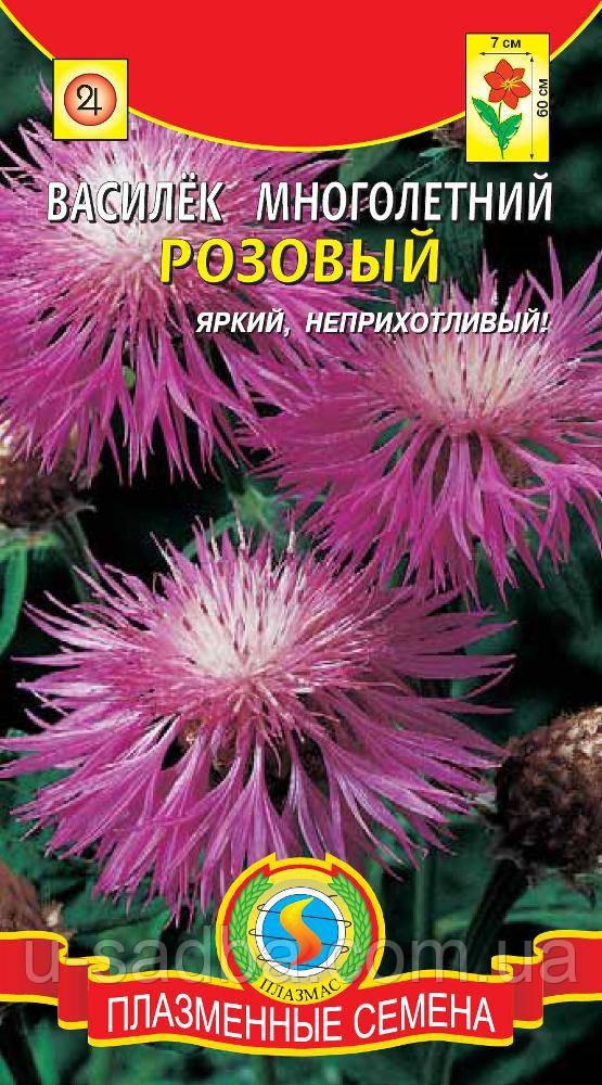Семена цветов  Василек многолетний Розовый 10 шт розовые (Плазменные семена)
