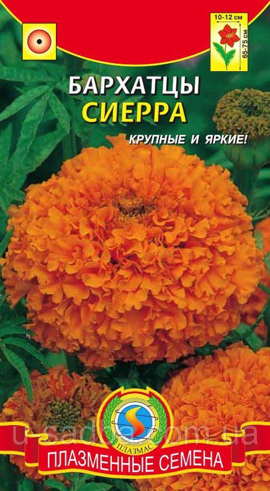 Семена цветов  Бархатцы Сиерра 45 шт оранжевые (Плазменные семена)