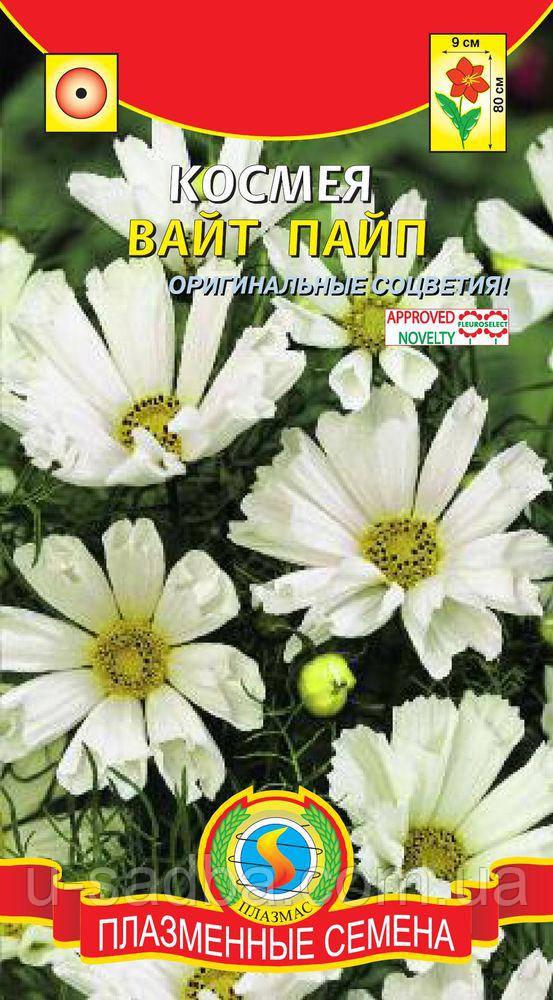 Семена цветов  Космея Вайт Пайп 10 шт пурпурные (Плазменные семена)