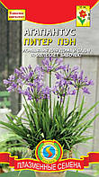Семена цветов  Агапантус Питер Пен 4 шт фиолетовые (Плазменные семена)