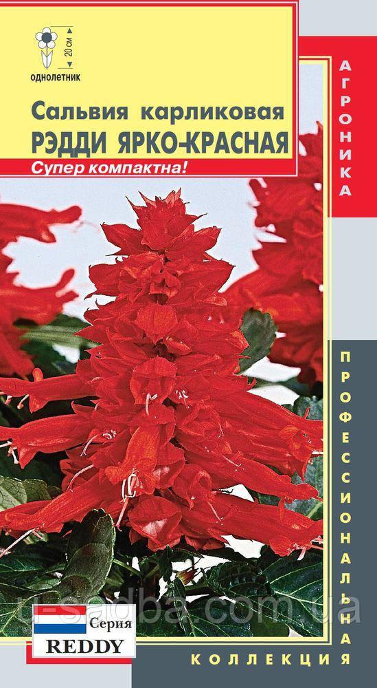 Семена цветов  Сальвия карликовая Рэдди Ярко-красная 10 штук красные (Плазменные семена)