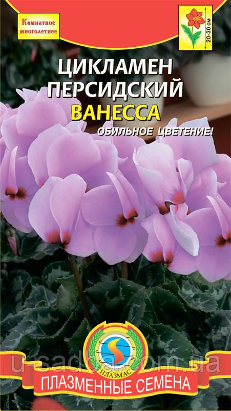 Семена цветов  Цикламен Ванесса 3 шт лиловые (Плазменные семена)