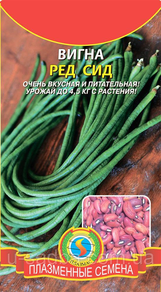 Семена бобовых Вигна Ред Сид 15 штук  (Плазменные семена)
