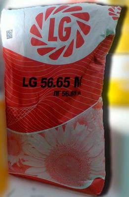 Семена подсолнечника ЛГ 5665 М