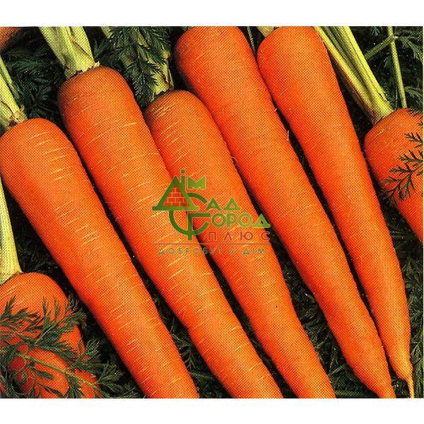 Семена Моркови Лосиноостровская  на вес