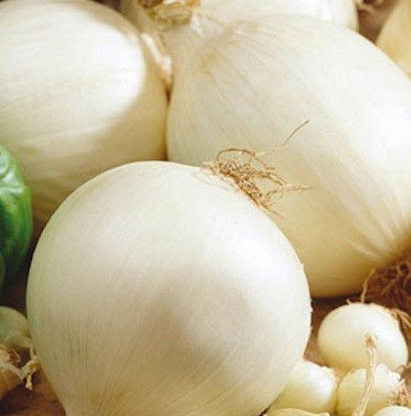 Весовые семена лука Сноуболл белый  оптом.