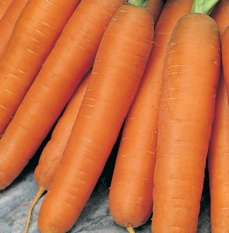 Семена Моркови Берликум