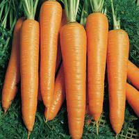 Семена моркови Вита Лонга (50 г)