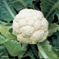 Семена цветной капусты Гудмен (2500 сем.) Bejo