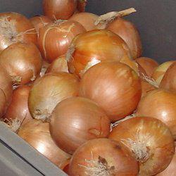 Семена лука репчатого Дайтона F1 (10 000 сем.)