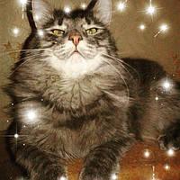 Корма и лакомства для котов и кошек