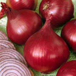Семена лука репчатого Ред Барон F1 (10 000 сем.) Bejo
