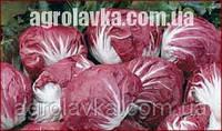 Цикорій салатний головчастий Індіго (5000), Bejo, Нидерланды