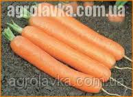 Морква, Дордонь F1 (Фракція 1,8+ г), (50000семян), Syngenta, Швейцарія