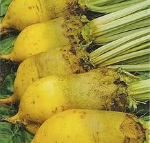 Насіння Кормовий буряк купити насіння,від виробника оптом,ціна.