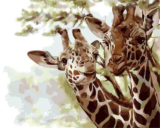 AS0278 Набор-раскраска по номерам Парочка жирафов, фото 2