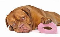 Распространенные формы гастрита у собак